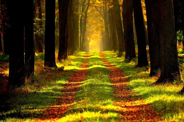 秋の森林を散歩