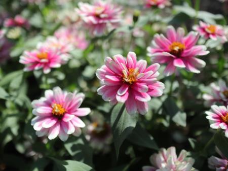 布引ハーブ園お花2
