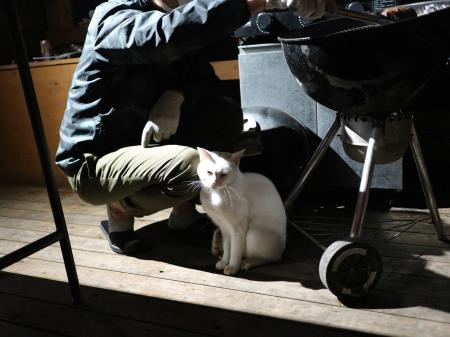 白猫君暖をとる
