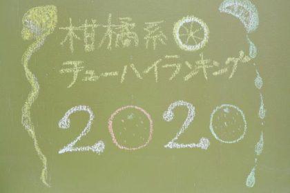 柑橘系チューハイランキング2020
