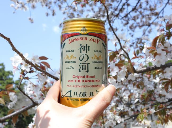 神の河ハイボールと京都御所の桜